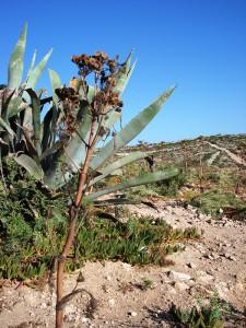 Natur Maltas